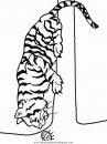 animales/tigres/tigres_26.JPG