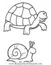 animales/tortugas/tortugas_04.JPG
