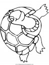 animales/tortugas/tortugas_15.JPG