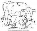 animales/vacas/vacas_18.JPG