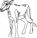 animales/vacas/vacas_22.JPG