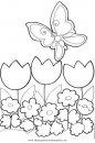 naturaleza/flores/amapolas_1.JPG
