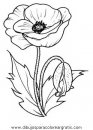 naturaleza/flores/amapolas_2.JPG
