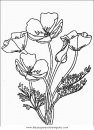naturaleza/flores/amapolas_4.JPG