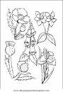 naturaleza/flores/flores_055.JPG
