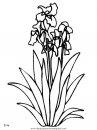 naturaleza/flores/flores_109.JPG