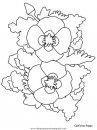 naturaleza/flores/flores_127.JPG