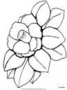 naturaleza/flores/flores_128.JPG