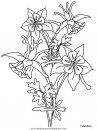 naturaleza/flores/flores_131.JPG