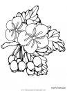 naturaleza/flores/flores_153.JPG