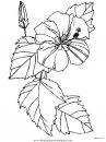 naturaleza/flores/flores_154.JPG