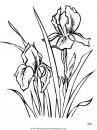 naturaleza/flores/flores_156.JPG