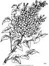 naturaleza/flores/flores_157.JPG