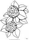 naturaleza/flores/flores_165.JPG