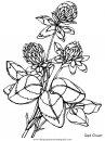 naturaleza/flores/flores_167.JPG