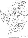 naturaleza/flores/flores_172.JPG